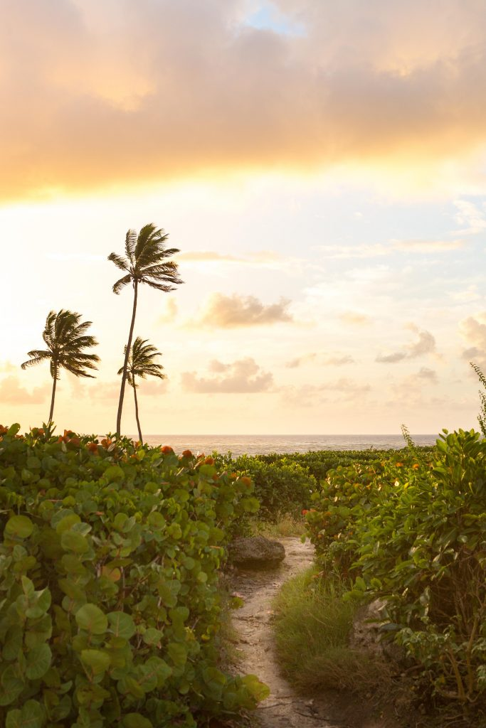 A cliffside path overlooking the beach in Barbados at sunrise