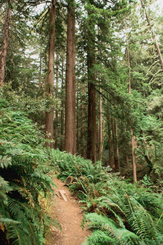 A hidden trail in Muir Woods National Monument